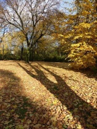 Oppau 05.11.2010. Herbst im Park.