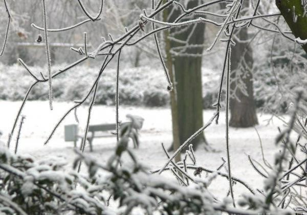 Oppau 23.12.2007 Winter im Park