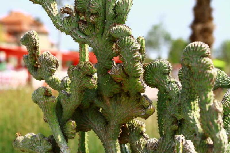 Ein richtig bizarres Kaktusgewächs