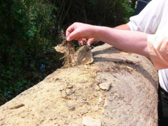Vom Efeu gesprengte Sandsteinmauer