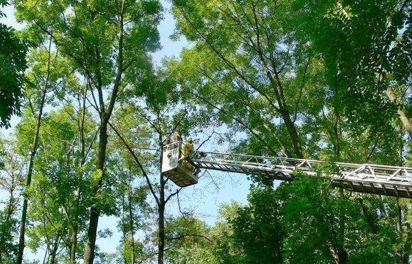Feuerwehr bekämpft Eichenprozessionsspinner 2007 im Edigheimer Wäldchen
