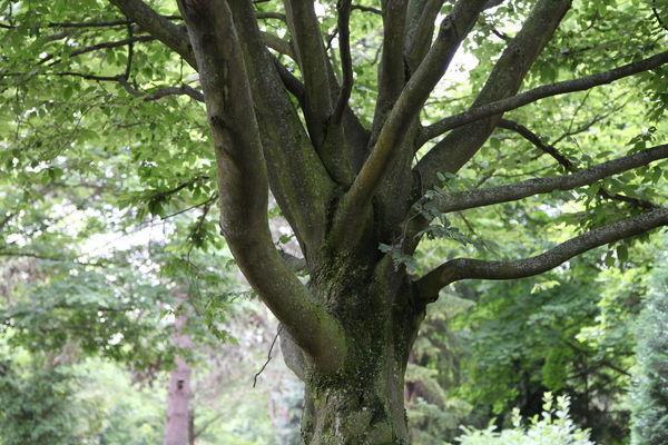 Wildwuchs in den Baumkronen.