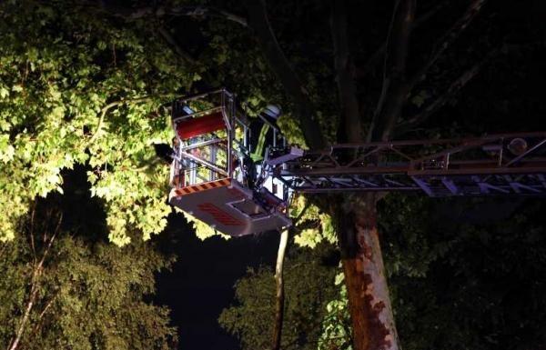 Im Ortsteil Oppau war die Edigheimerstrasse betroffen. Kurz vor der Ortsausfahrt in Richtung Ludwigshafen war die Fahrbahn durch Äste beeinträchtigt. Reste mussten aus den Bäumen entfernt werden