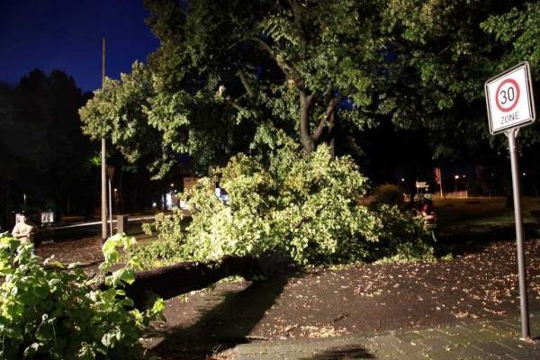 Der umgeknickte Baum blockiert die gesamte Fahrbahn