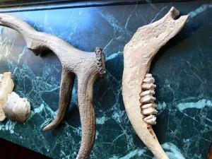 Tierknochen