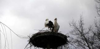 Zahlreiche Nest- und Bodenbrüter haben im Vogelpark Bobenheim-Roxheim eine Anlaufstelle gefunden