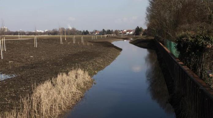 Altrheingraben an der Bocksbrücke