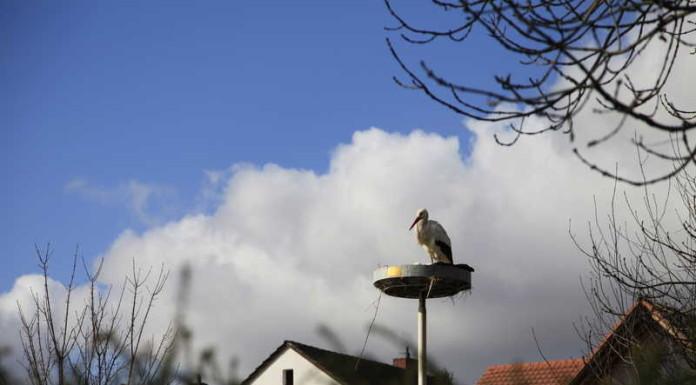 Bobenheim-Roxheim 5.3.2015 Vogelpark.