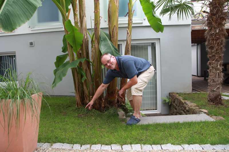 Der Hausherr zeigt uns seinen ganzen Stolz - Die 6m hohe Bananenstaude