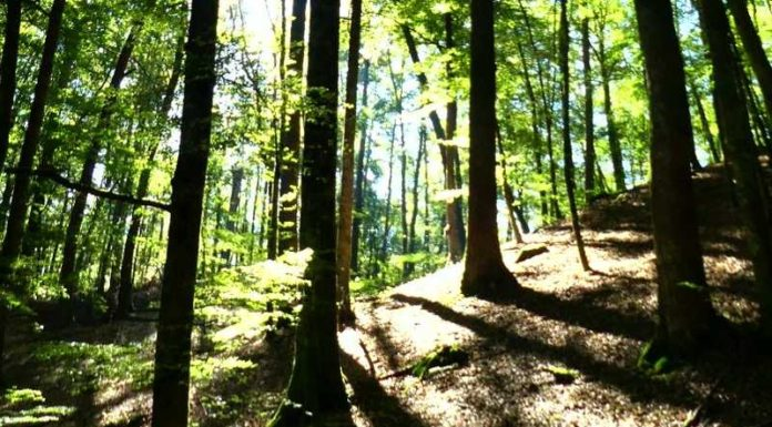 Biosphärenreservat Pfälzerwald-Nordvogesen