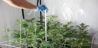 Bei der Wohnungsdurchsuchung fanden die Beamten eine professionelle Indoor-Plantage
