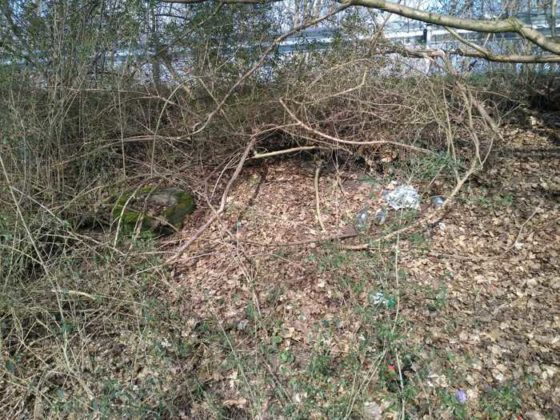 Oppauer Wäldchen. Eine Schande. Und das Foto zeigt nur ein kleines Stück der Oppauer Müllhalde.