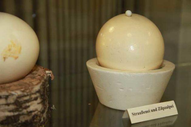 Straußenei und Ei von Zilpzalp
