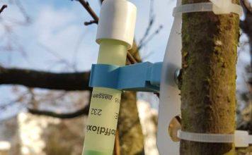 Ludwigshafen: Messergebnisse: Luftbelastung mit Stickstoffdioxid-Konzentration