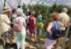 Die Besuchergruppe bekam interessante Einblicke in den regionalen Obst- und Gemüseanbei