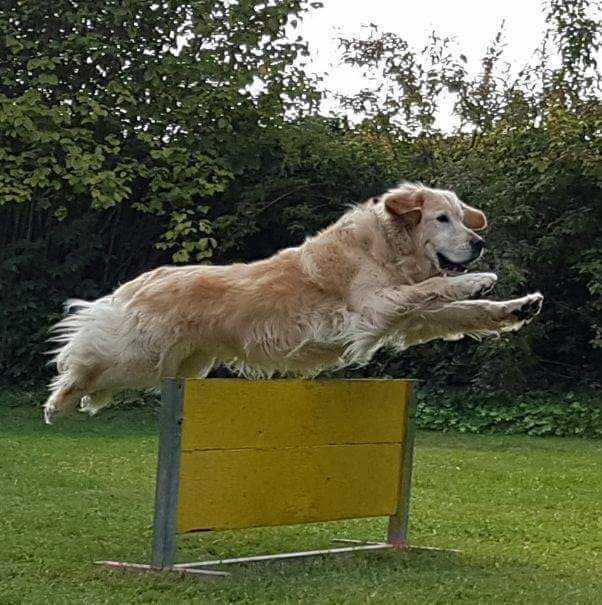 Buddy - Einer der vielen Hunde beim Turnier des HSV Lu-Friesenheim