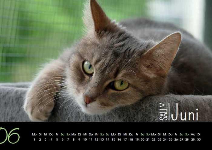 Einen tollen Kalender für 2020 kaufen und die Tierhilfe unterstützen