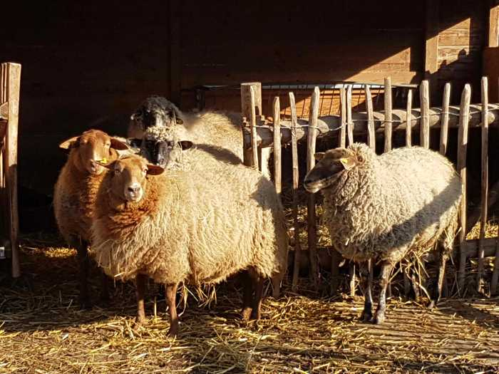 Es gibt wieder viel Neues aus der Jugendfarm - Foto: Jugendfarm Pfingstweide